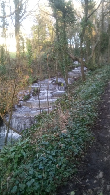 nash brook