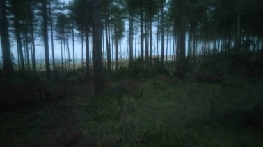 early morning forest